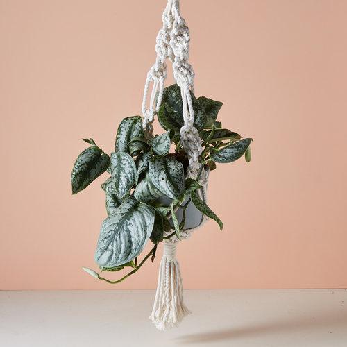 geo-fleur-15-9-16165171